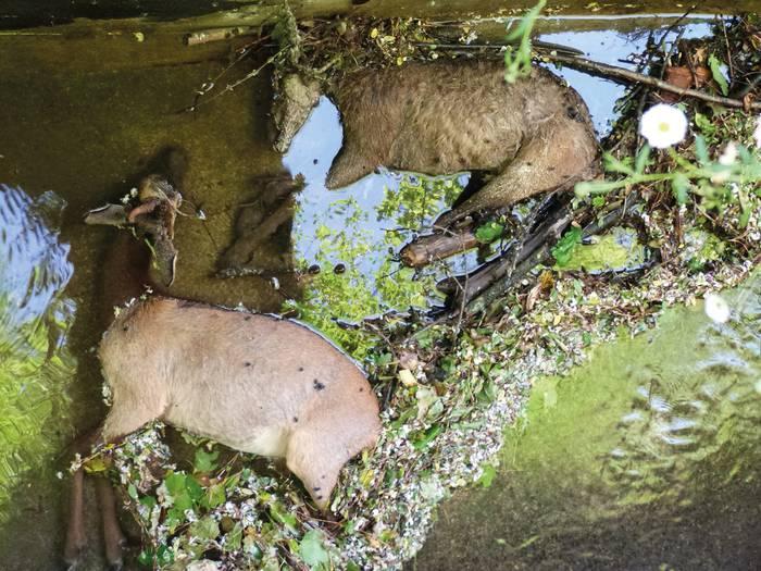 Leitzarango ubideak, animalientzat hilgarriak